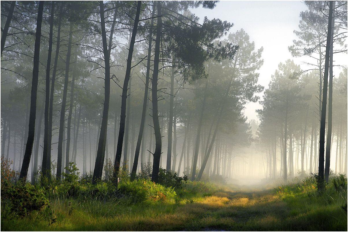 paysage des landes