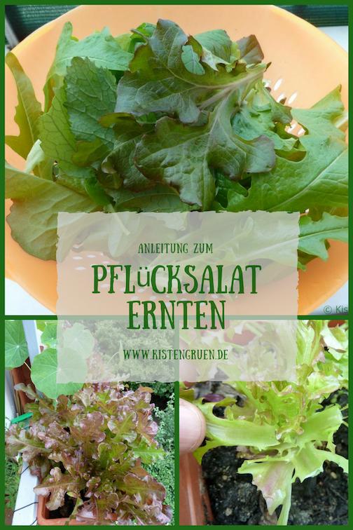 Pflucksalat Lasst Sich Ideal Auf Dem Balkon Anbauen Bei Der Ernte Gilt Es Allerdings Ein Paar Wichtige Grund Salat Pflanzen Gemuse Anpflanzen Salat Anpflanzen