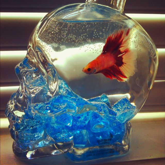 Used an old liquor bottle for my beta fish tank projects for Used fish tank
