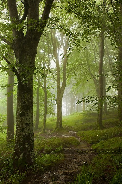 Misty in the forest.