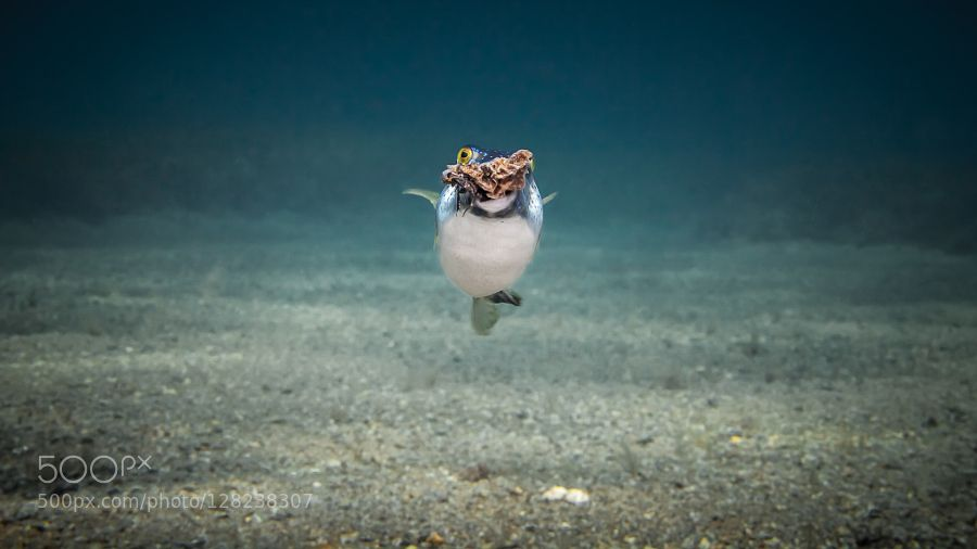 My Rubble by robertrath #Underwater #fadighanemmd