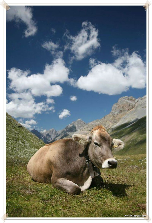 Animals, Cow, Animals beautiful