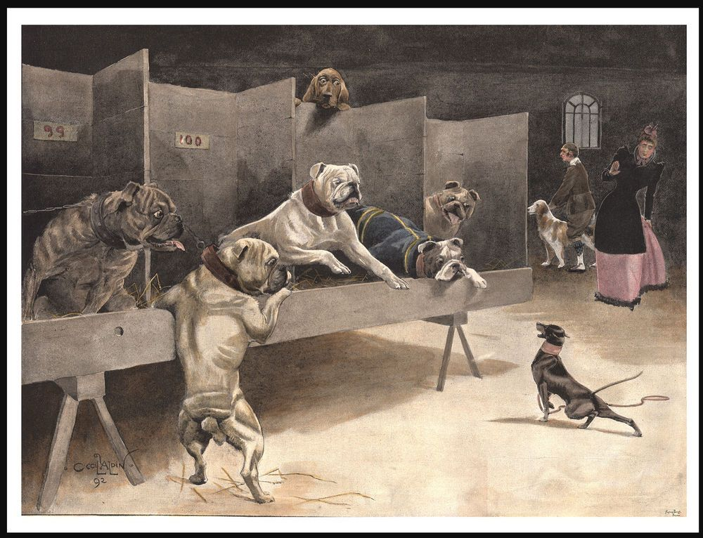 English Bulldog And Toy Terrier Dogs At A Show Vintage Style Dog