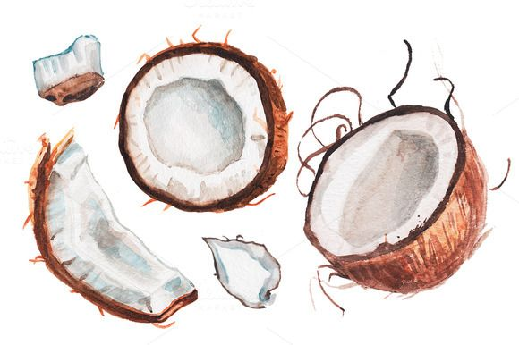 Watercolor Coconut Illustration Illustration Watercolor Fruit
