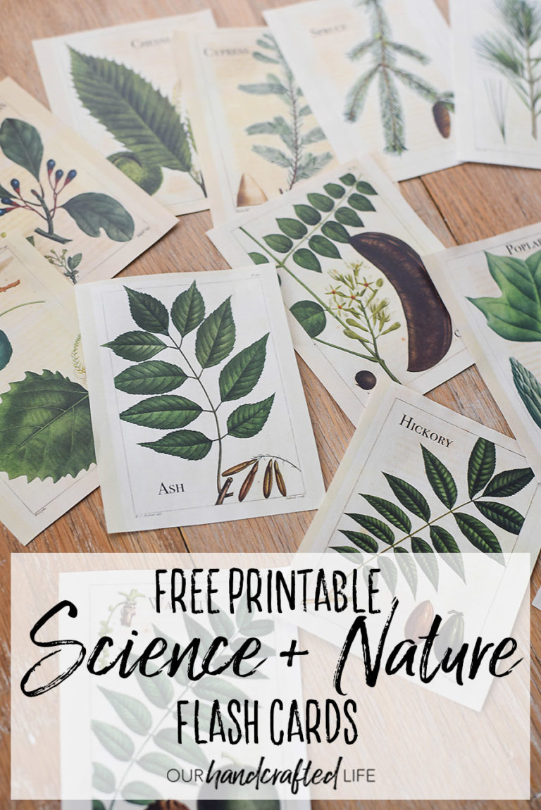 Free Printable Vintage Science and Nature Flash Cards - Our Handcrafted Life