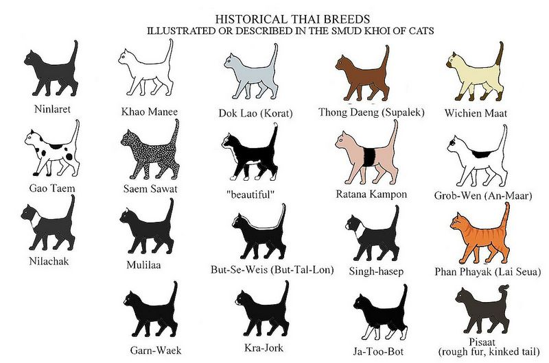 Historical Thai Breeds Chart Cat Breeds Chart Cat Breeds Cat