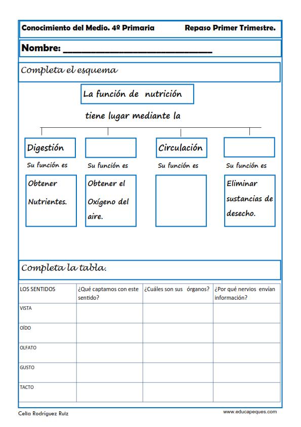 Fichas Conocimiento del Medio Cuarto de Primaria | Actividades de ...