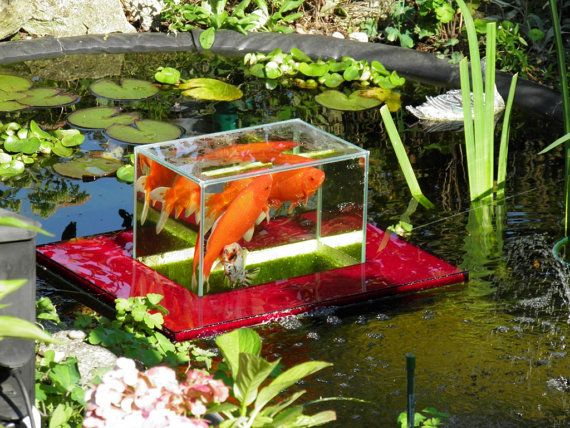 Flying aquarium linear 1200 rot fish observatory for Surface fish ponds