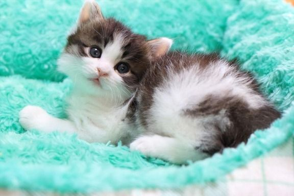 I love cats. I have always wanted a cat.