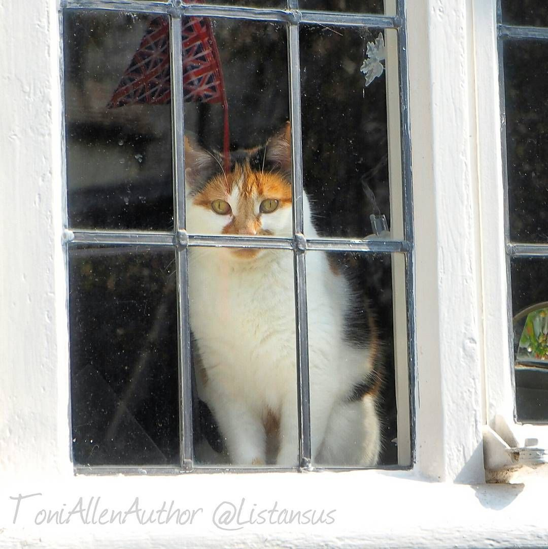 Look who I saw sitting in a window!  If you're wondering about the reflected union jack bunting that's hung on the front of the cottage in readiness for the Queen's official 90th birthday celebrations.  #jaketalbotinvestigates #JTI #amwriting #writersofinstagram #writerslife #writer #catsofinstagram #catoftheday #catagram #cat #cute #cutebabyanimals #catwhiskers #catinwindow #animallovers #window #lovethis #photooftheday #ig_cat #ig_cuteness #pretty