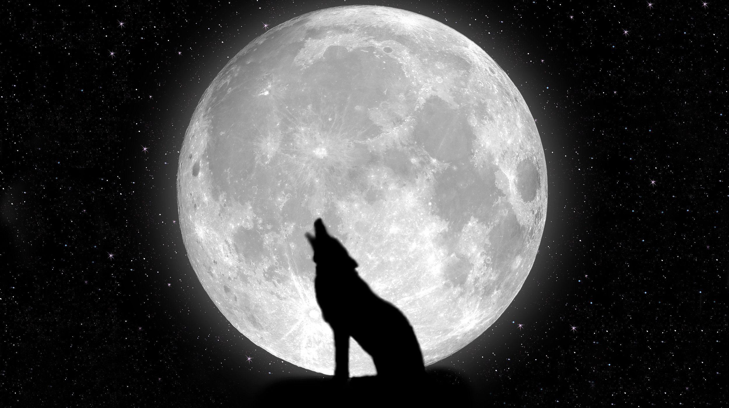 жёны собака воет на луну картинка брат хорошо известный