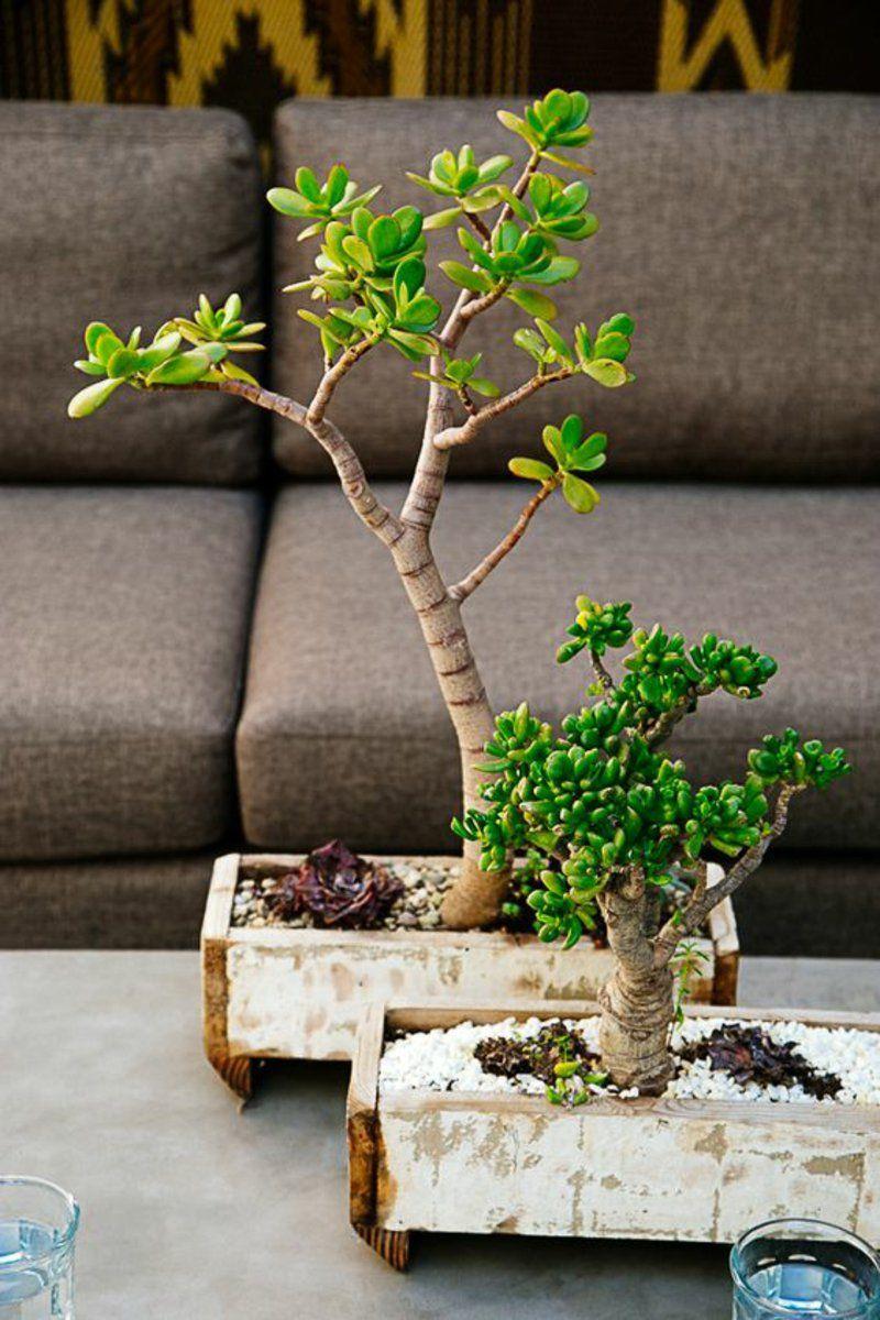 bonsai arten als zimmerpflanzen richtig pflegen | zimmerpflanzen, Gartengerate ideen
