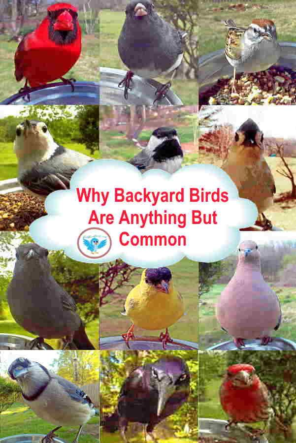 Common Backyard Bird Types The Unusual And Rare (With ...