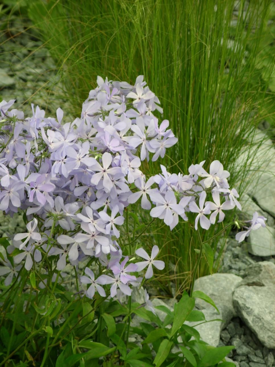 Perennial Plants For Winter Spring Perennial Flowers In My