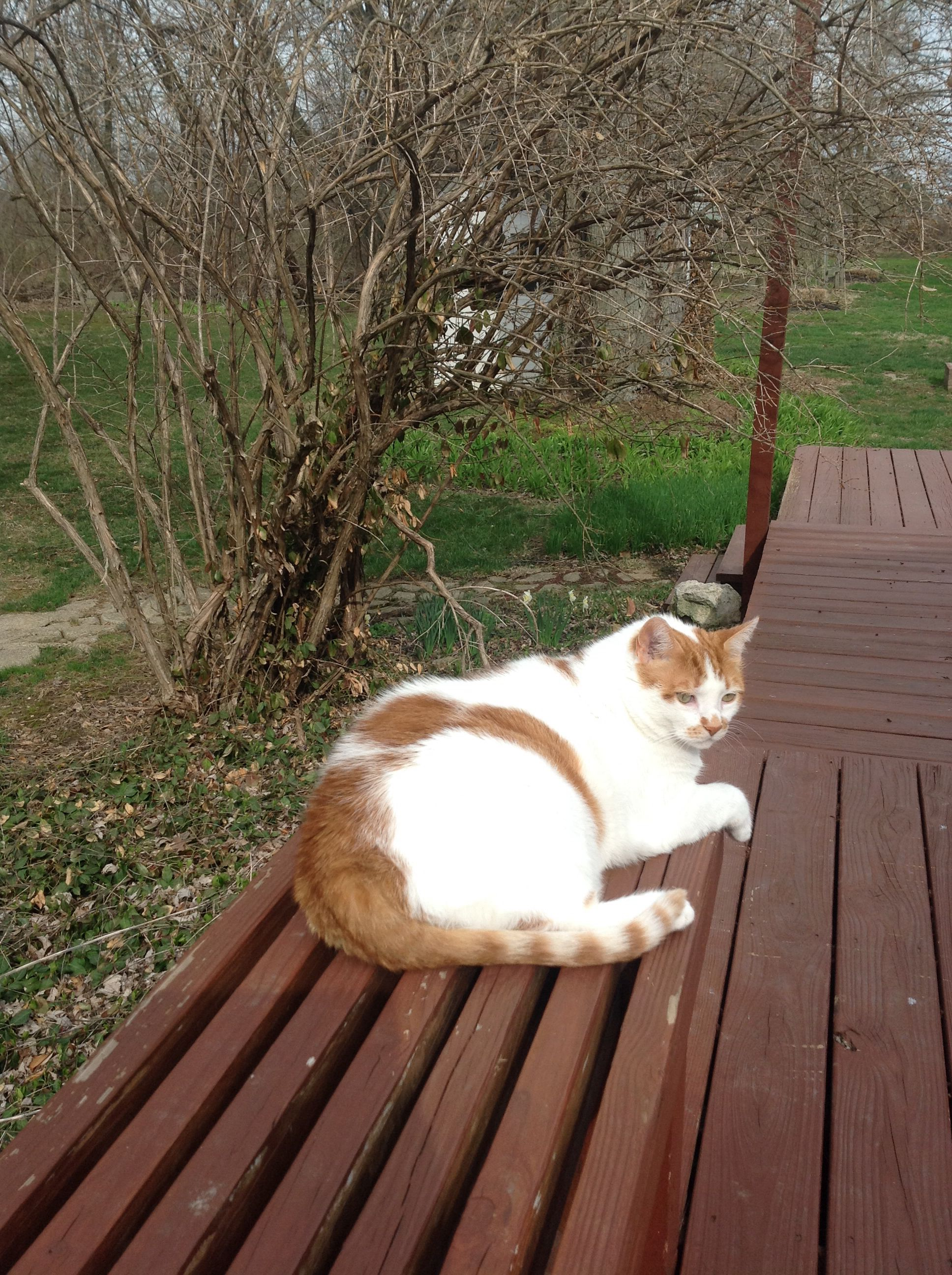 Patches enjoying Spring  before it turns cold again.