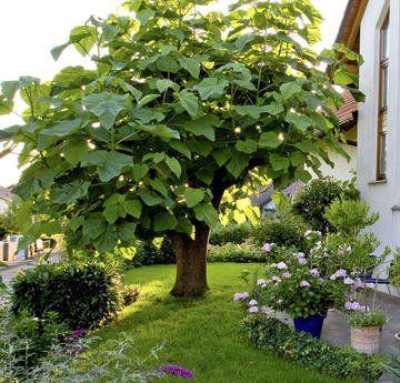 Die schönsten Bäume für kleine Gärten