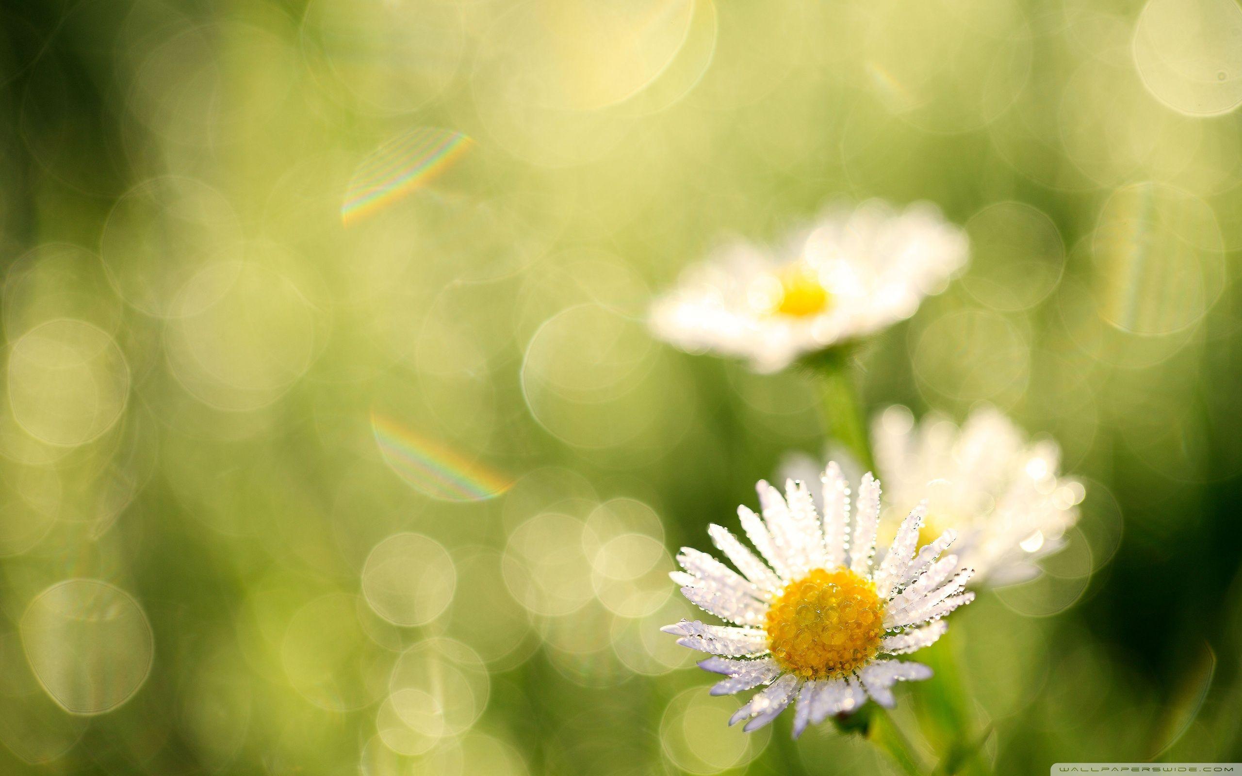 x grass morning dew wallpaper | 3d wallpapers | pinterest | morning