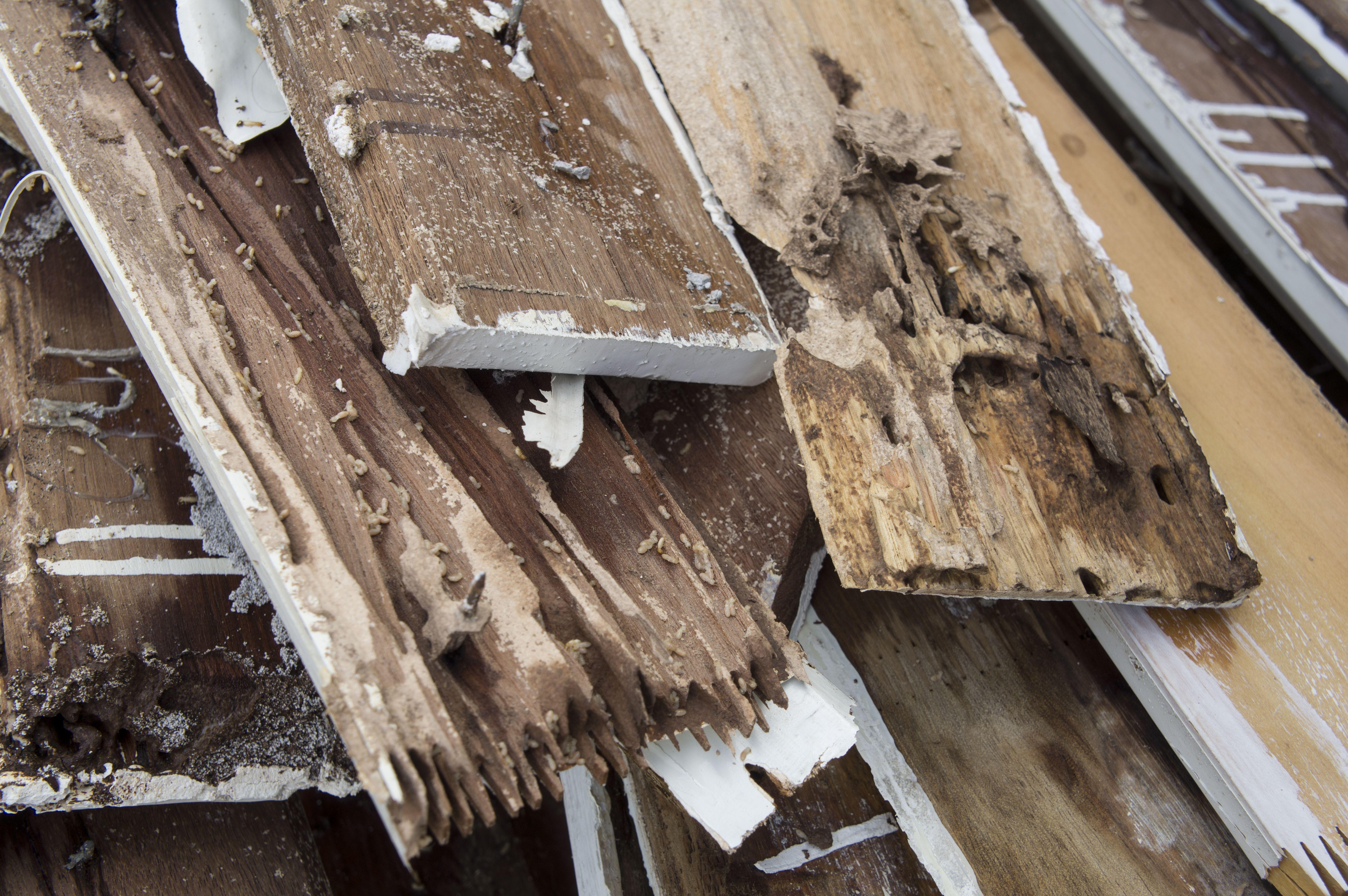 Termite Damage Signs Detecting Termite Damage