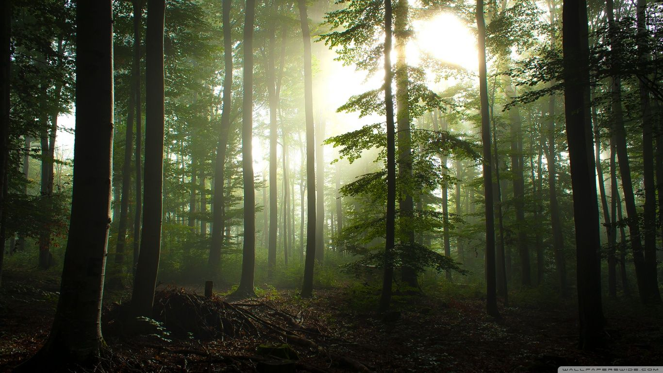 nature wallpaper high resolution forest wallpapers full hd