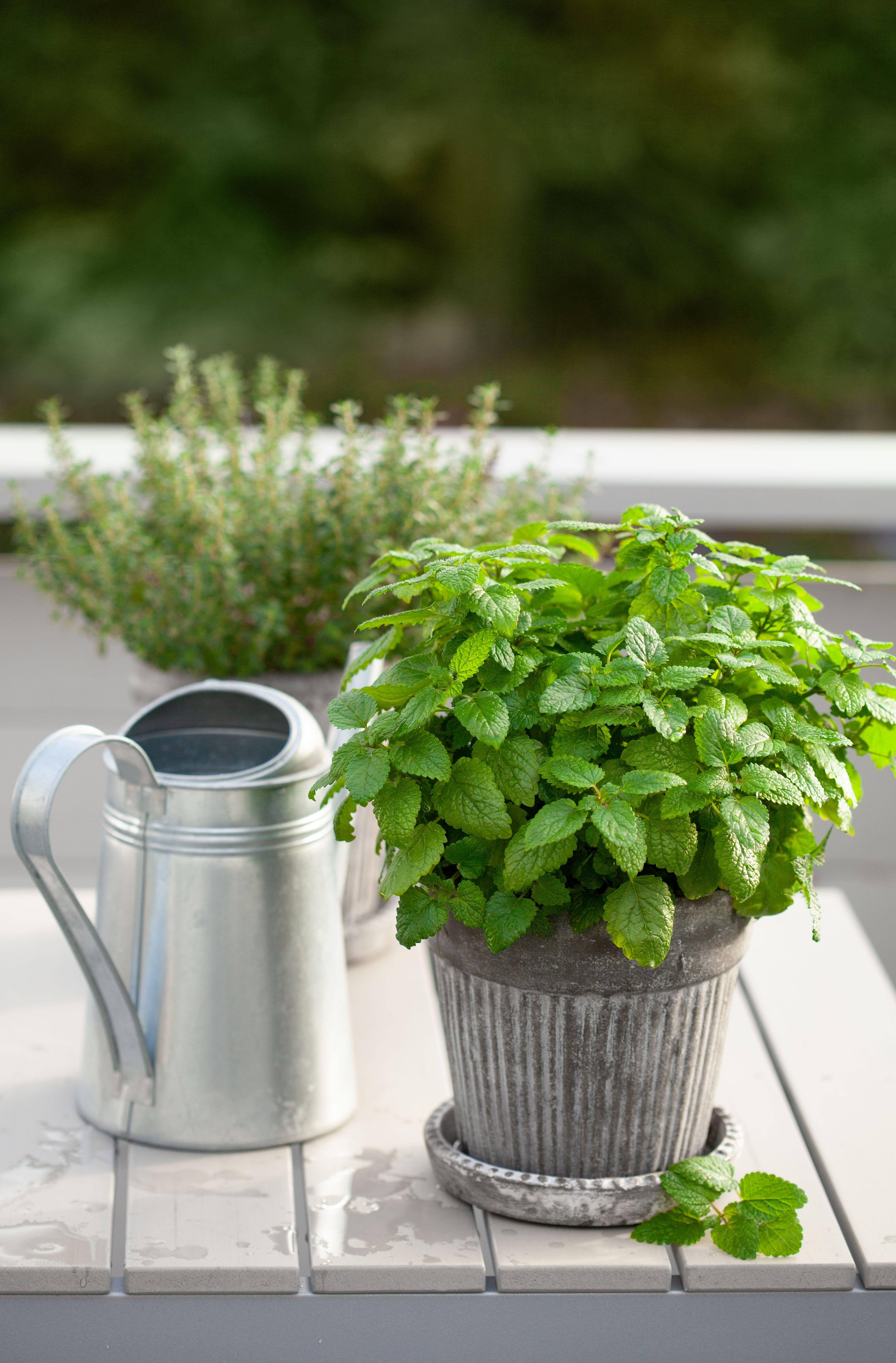 Balcony Herb Garden Guide in 2020 Balcony herb gardens