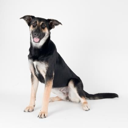 Gregoria Is Available For Adoption At Our Mission Campus Dog Adoption Adoption Cute Animals