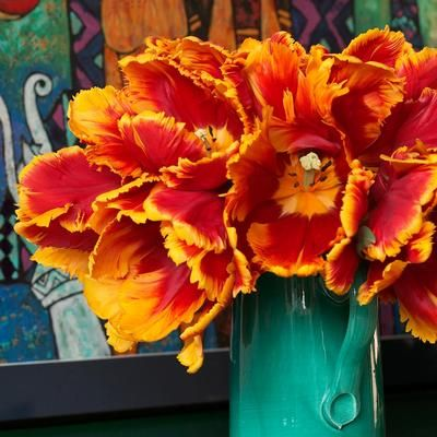 Bright Parrot Tulip Turn Heads With These Extra Large Tulips Their Petals Are A Swirl Of Canary Yellow And Tomato Red
