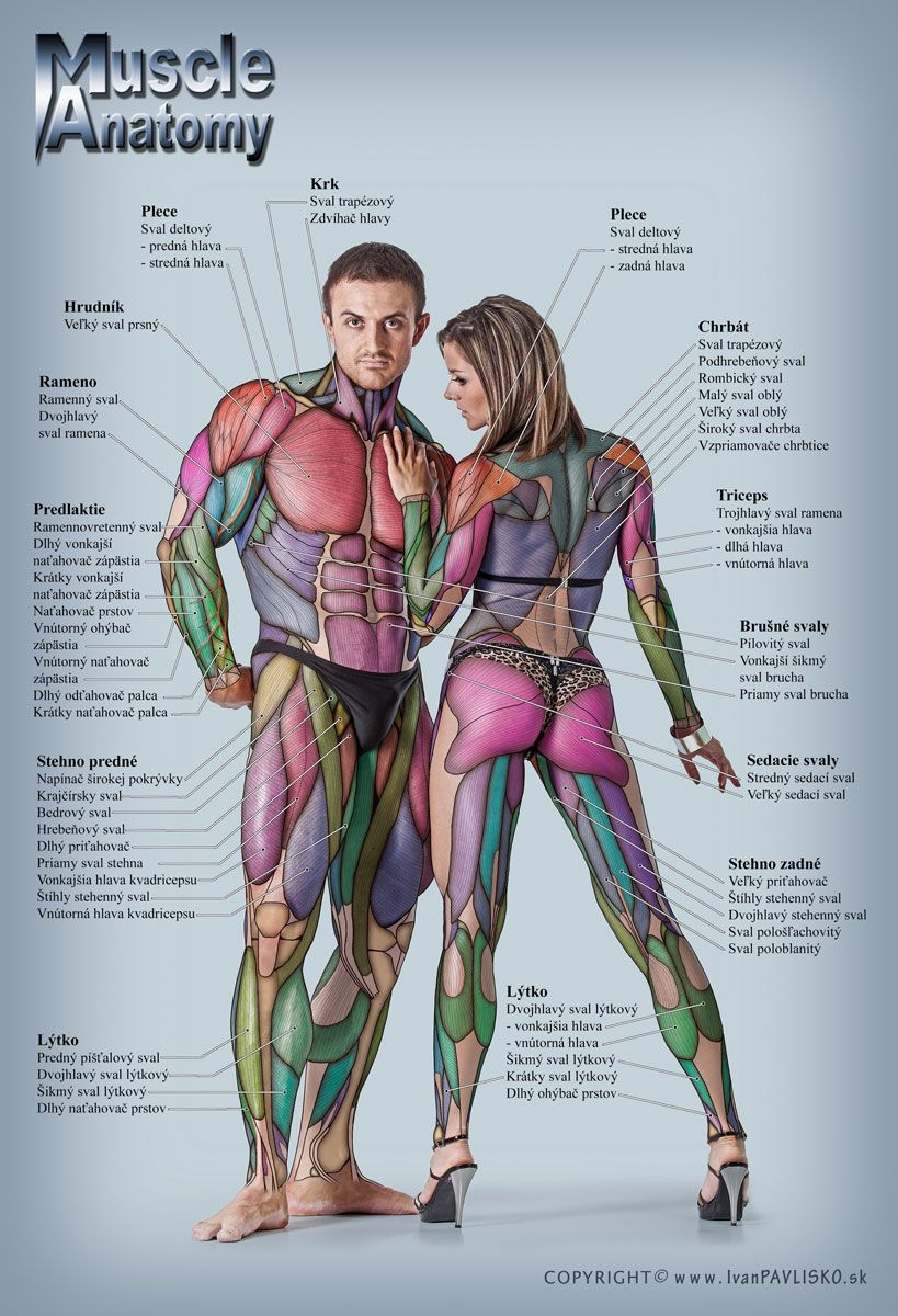 Anatomymusclefitness Weight Liftingbody Sculpting Pinterest