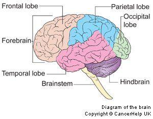 Brain diagram hindbrain product wiring diagrams signs symptoms the most common symptoms of brain tumour people rh pinterest com brain visual cortex diagram brain diagram limbic system ccuart Gallery