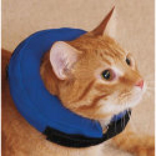 719db7bad4a1067ee66baf18889edfc6 - How To Get My Cat To Wear A Collar