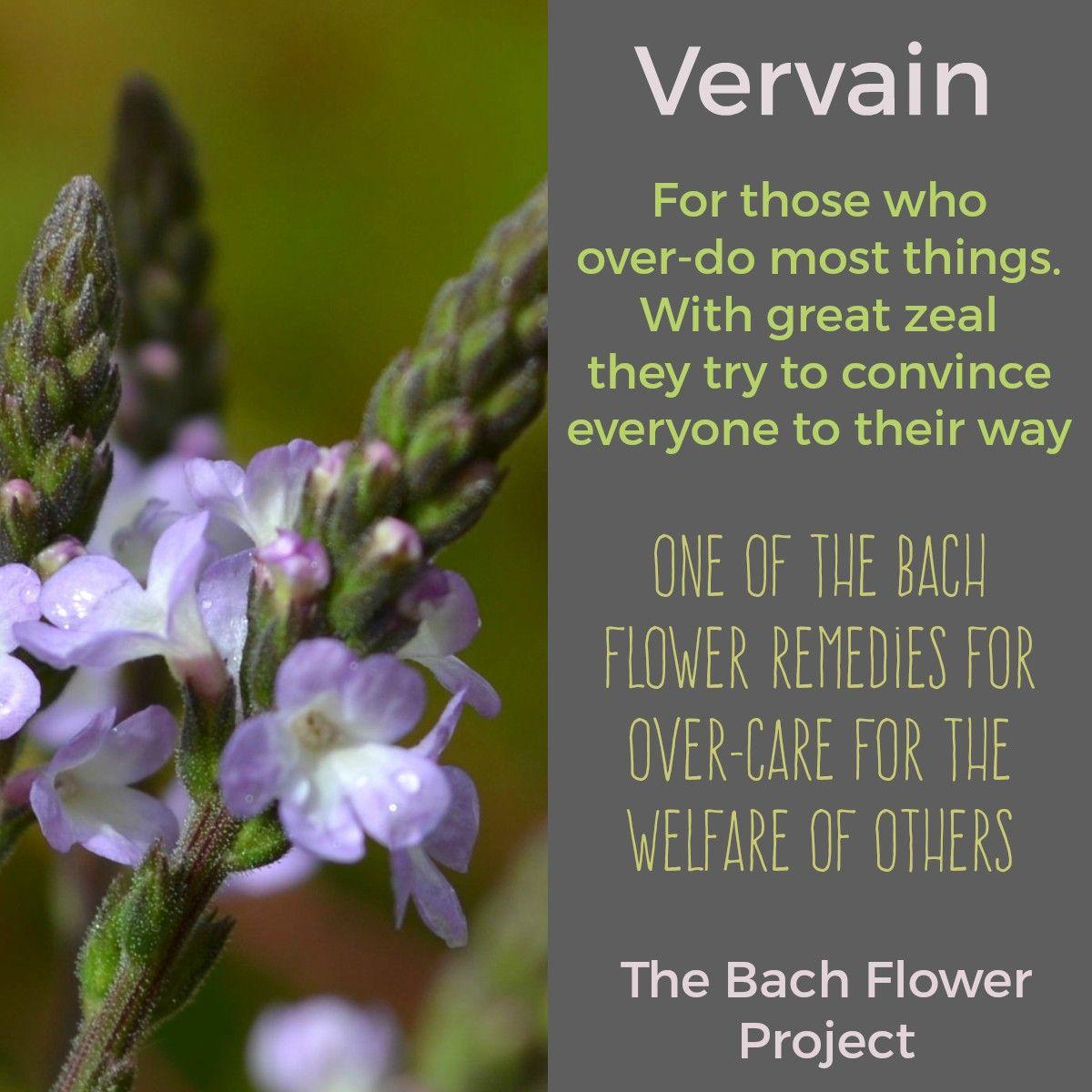 Bach Flower Remedy Vervain Bach Flower Remedies Flower Remedy Flower Essences Remedies