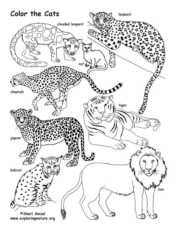 Teach Your Kids About Animals While Coloring On Exploringnature