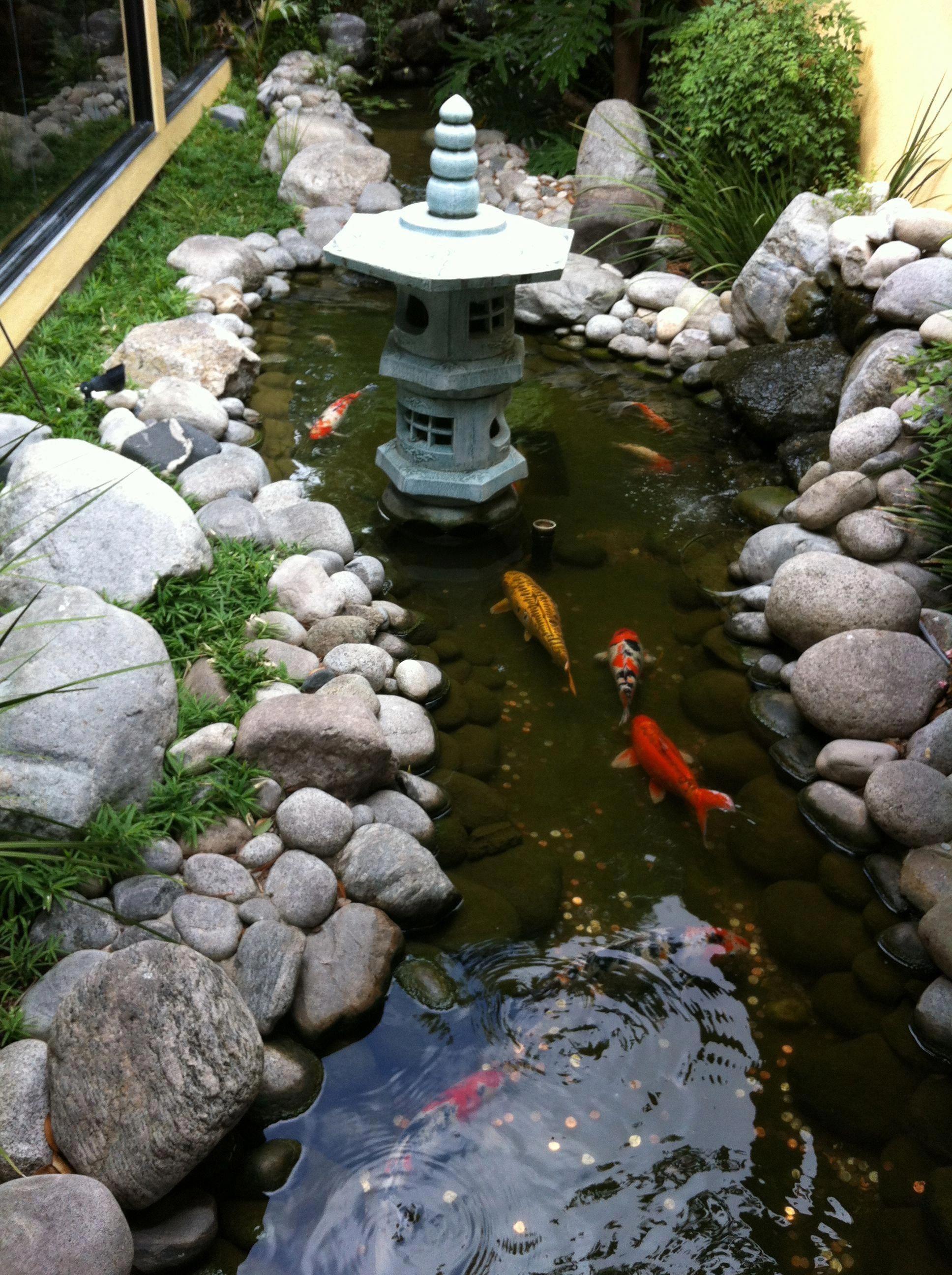 Construire Son Bassin De Jardin koi fish information | jardin zen, jardins