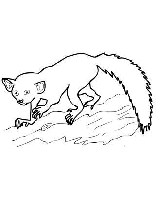Aye Aye Madagascar Lemur Coloring Page Aye Aye Lemur Coloring