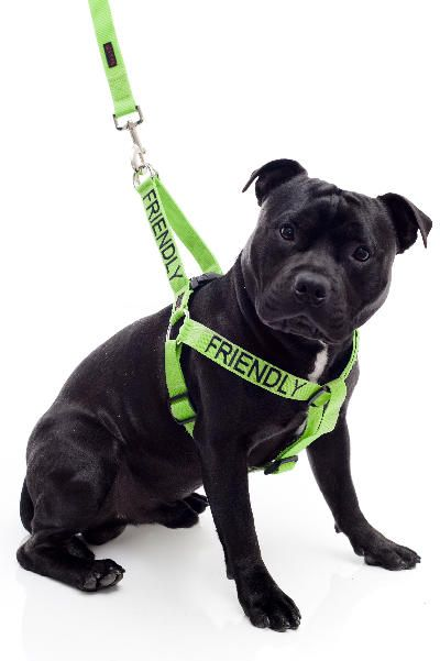Friendly Dog Collars Online Store Cute Need One For Roxy That