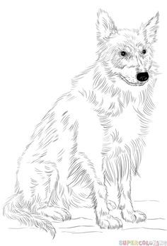 How To Draw A Border Collie Step By Step Drawing Tutorials For