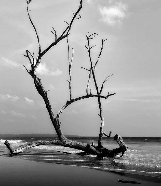 Havelock Island: Drift Wood At Havelock Islands , Andaman , India