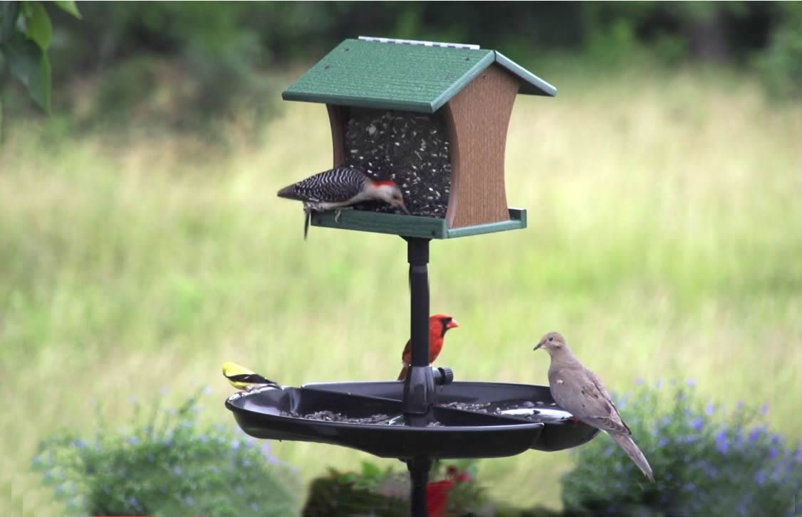 Brome seed buster seed tray and catcher bird feeders