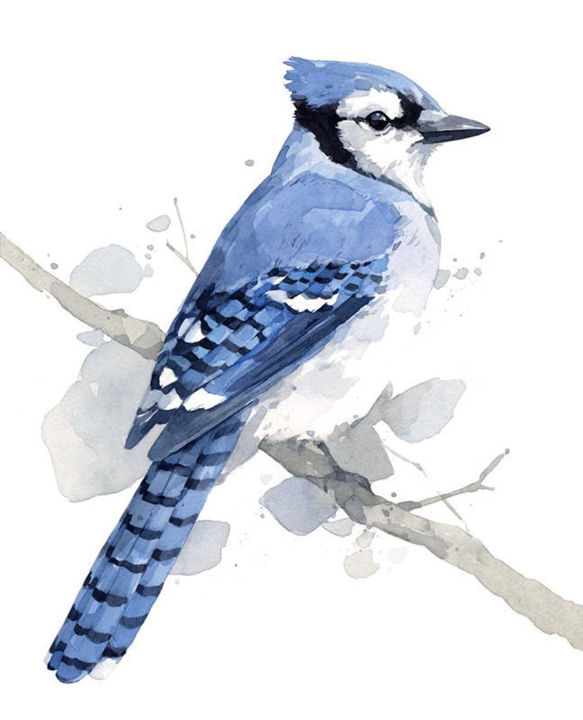 Blue Jay Print 8x10 Bird Watercolor Painting Kresby Akvarel A