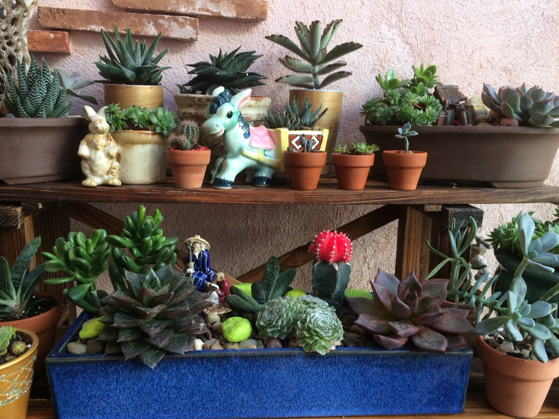Mi colección