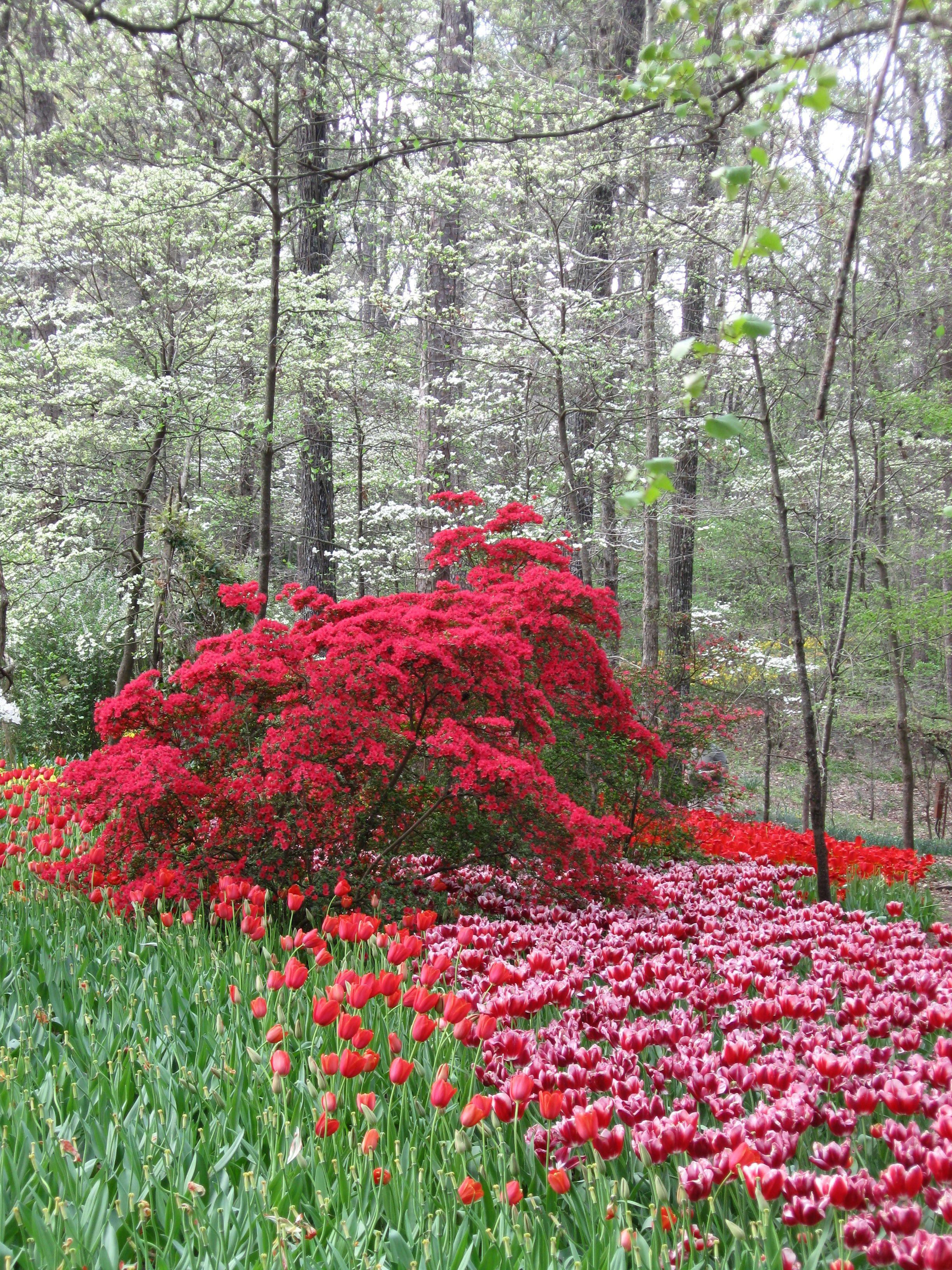 Garvan Woodland Gardens Hot Springs Ar Favorite Places Spaces