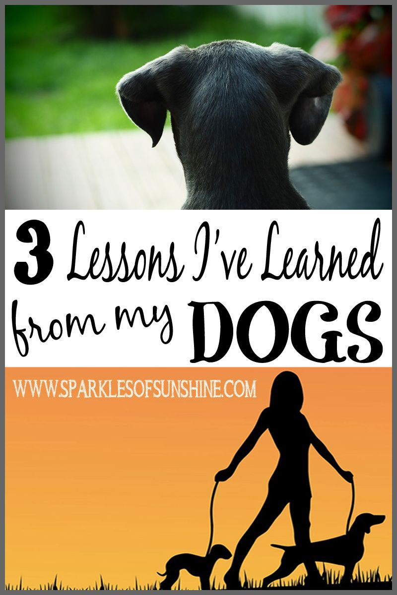 3 Lessons I've Learned From My Dogs Sparkles of Sunshine