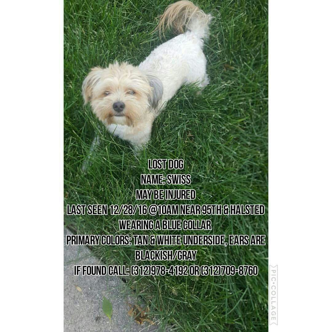 His Name Is Swiss Last Seen 95th And Halsted He May Be Injured 500 REWARD For Safe Return