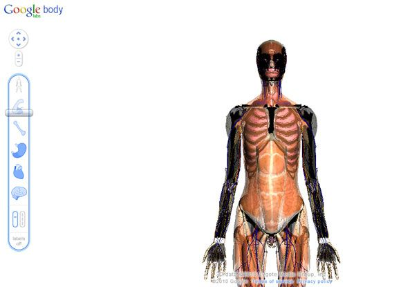 6 Virtual Tours Of The Human Body For Free Interactive Anatomy ...
