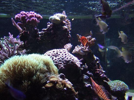 Birch Aquarium - San Diego, CA (With images)   Birch ...