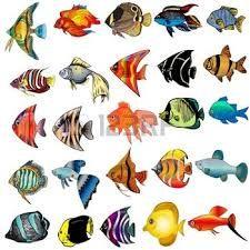 Resultado de imagen para dibujos peces japoneses  macoyordan