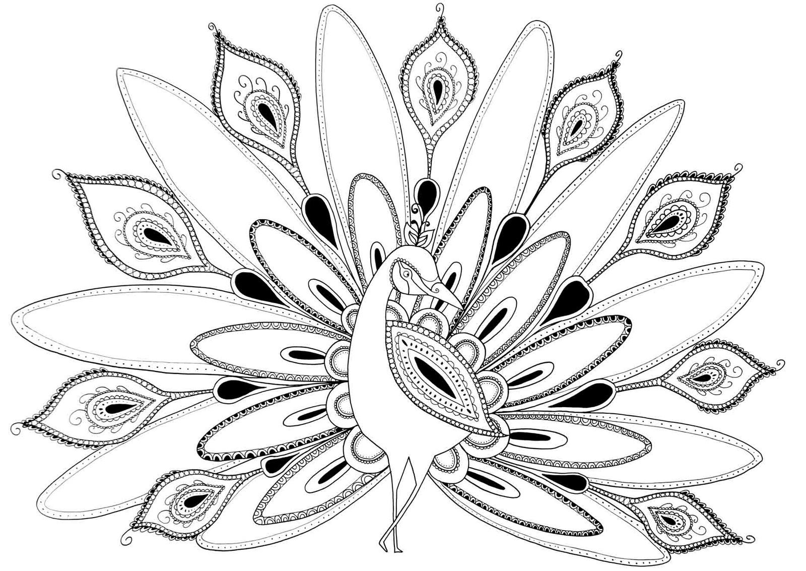 Peacock Coloring Pages Images coloring pages Pinterest