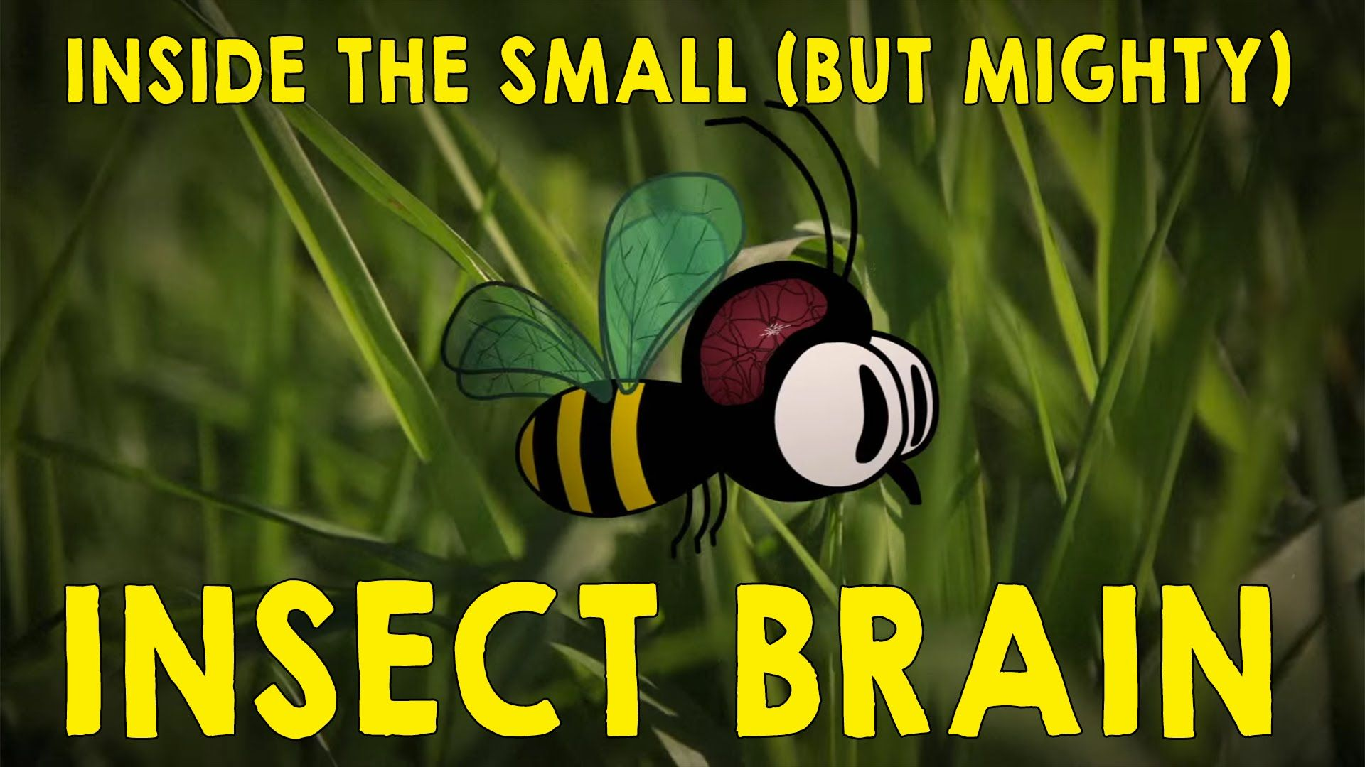 Why the insect brain is so incredible Anna Stöckl
