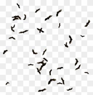 Swarm Of Bats Png Clipart Clip Art Downloadable Art Png