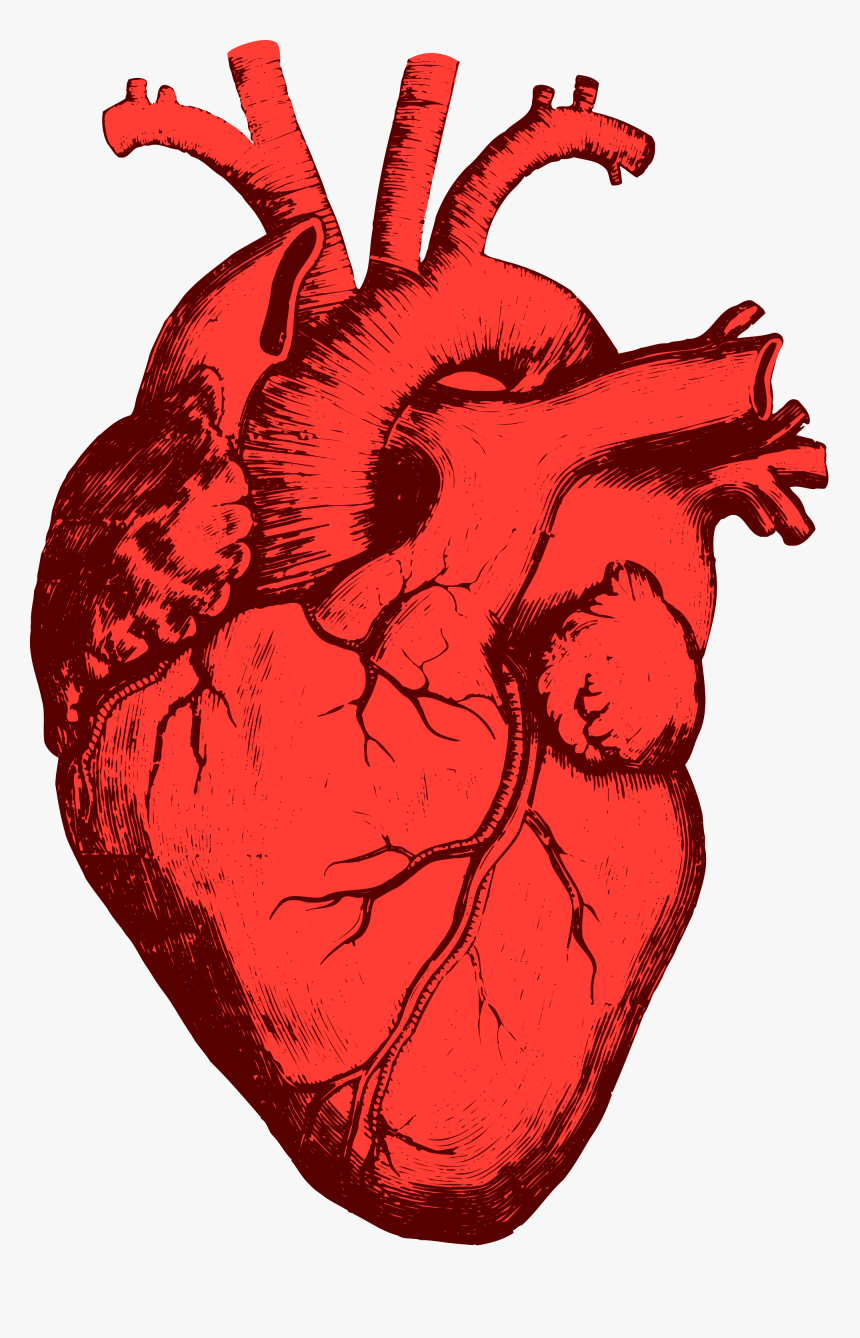 Heart Png Real Coracao Humano Desenho Png Transparent Png Is Free Transparent Png Image To Explore More Simi 3d Printing Service Heart Illustration Prints