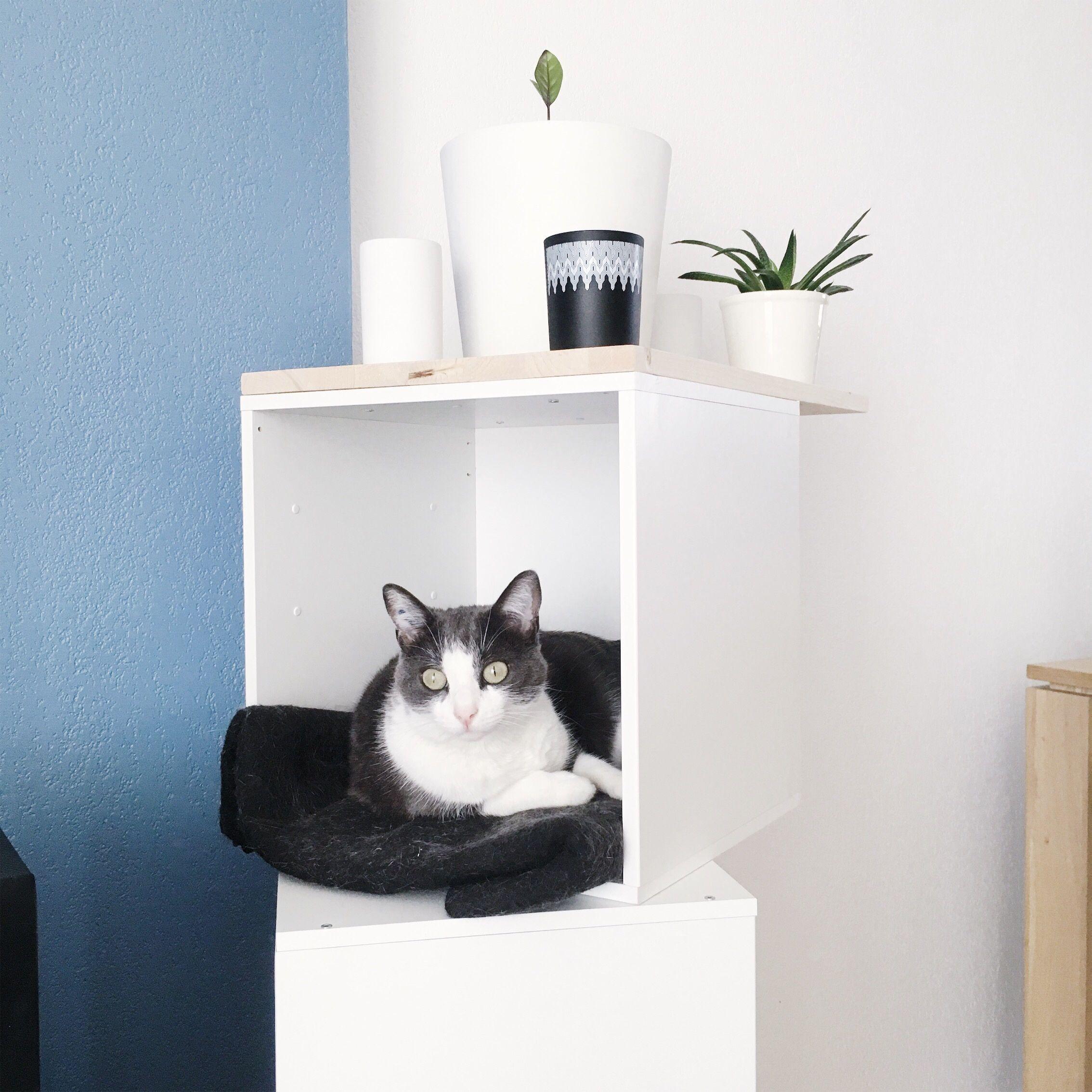 Arbre A Chat Leroy Merlin diy créer un arbre à chat facilement